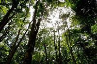 Proyecto invita a guatemaltecos a que adopten un árbol