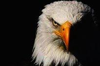 Rincón Positivo de Transdoc - ¿Serás águila o gallina?