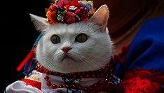 Encuentran un vínculo entre un virus común en gatos y el cáncer en humanos