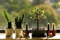 5 Tips para elegir las plantas para el dormitorio