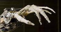Cada vez más cerca de los humanos: Crean un robot con músculos vivos (vídeo)