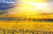 Científicos hallan nueva manera para producir energía de luz solar