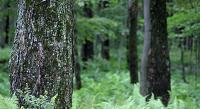 No son efectos especiales: Fascinantes imágenes de un bosque que 'respira