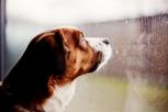 5 Cosas Extrañas Que Los Perros Pueden Sentir (Y Los Humanos No)