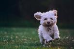 Tener un perro puede beneficiar tu salud y la de tu familia