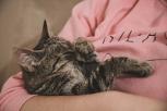 Estudio señala que los gatos sí se preocupan por sus dueños