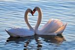 10 especies animales que se aman para toda la vida